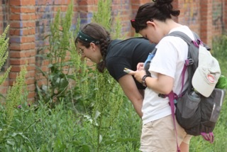 Rachel and Ann studying pollinators