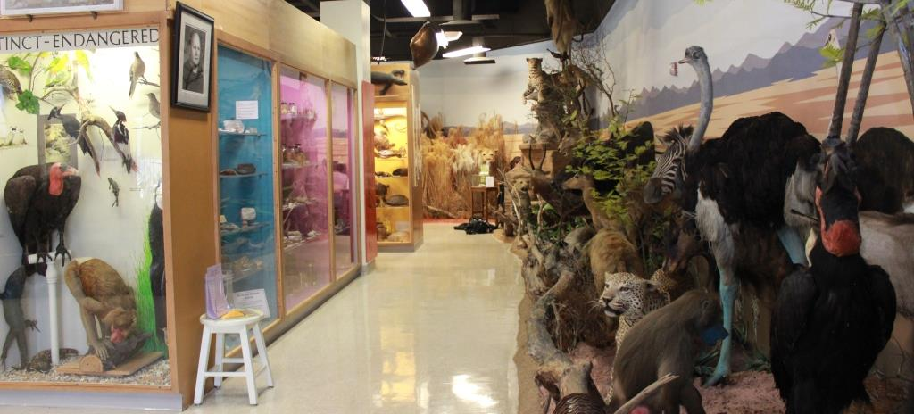 Opportunities At The Jurica Suchy Nature Museum