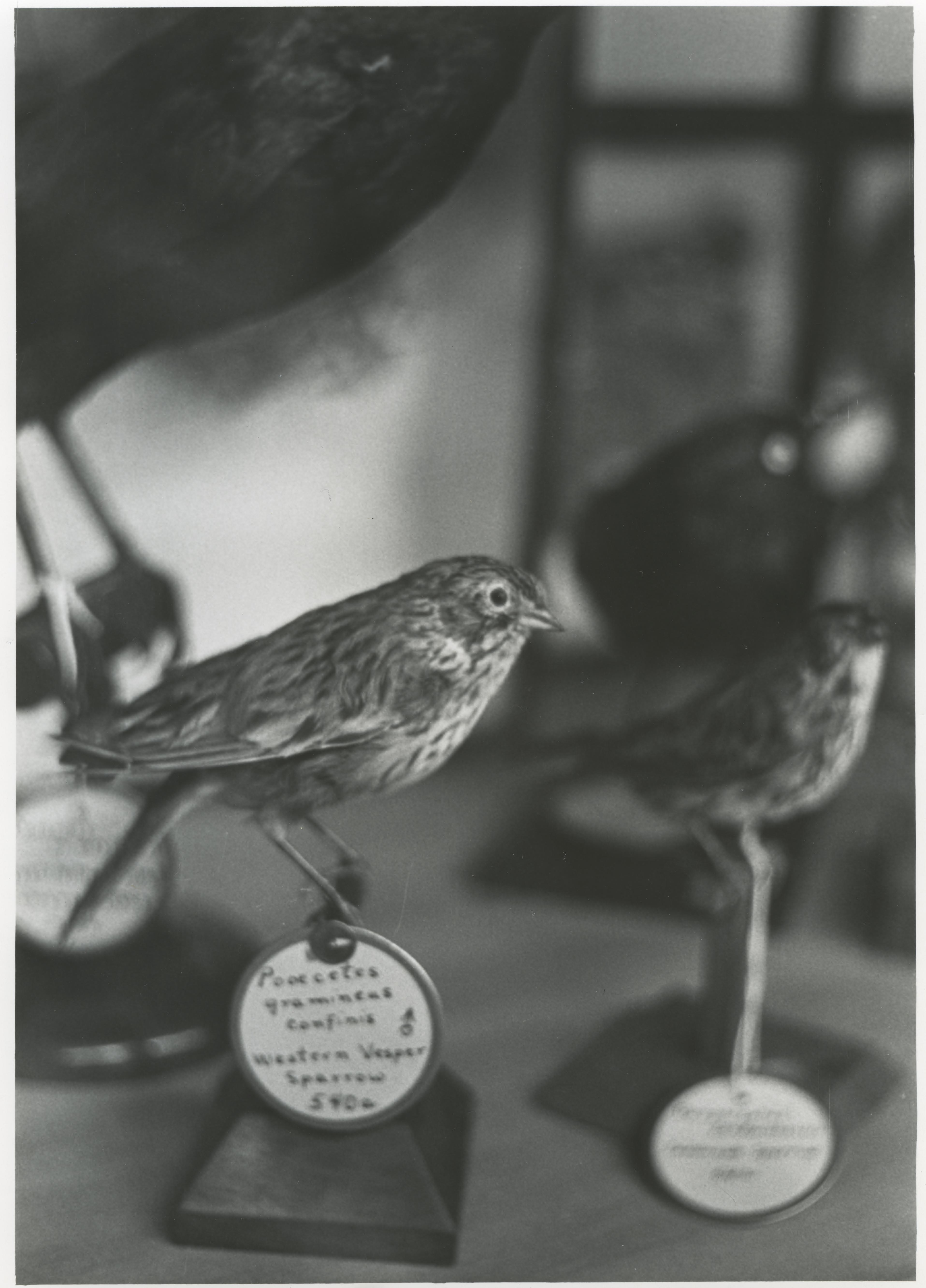 Photo of bird specimens from archives