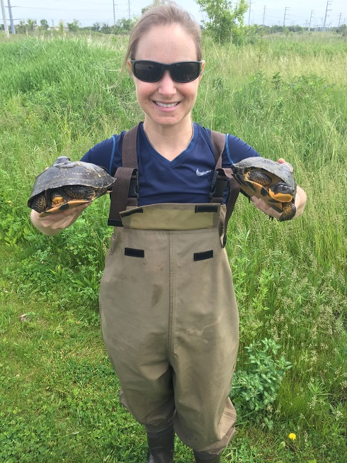 Leigh Anne Harden, Ph.D., with two Blanding's turtles.